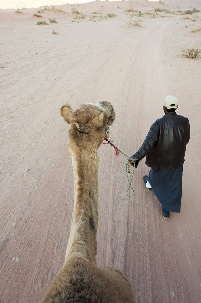 adventure activities wadi rum camel