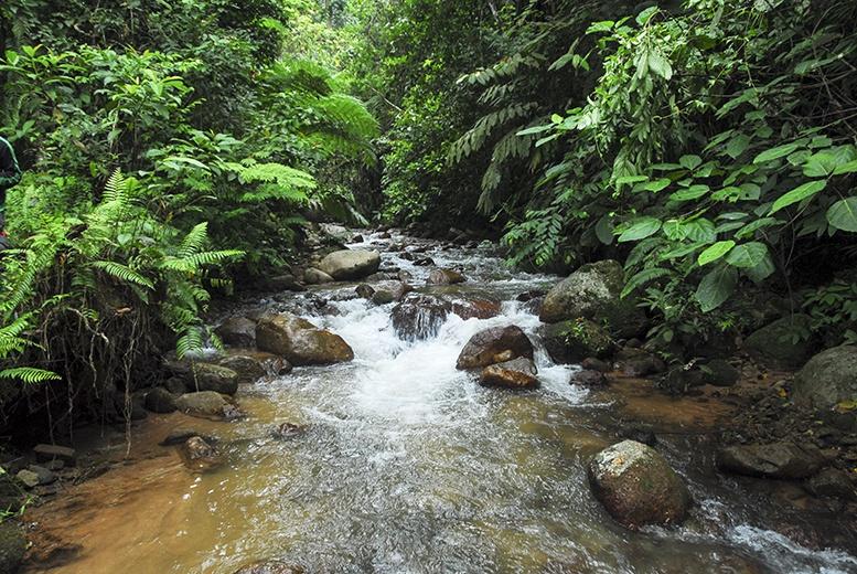 Cameron Highlands Stream