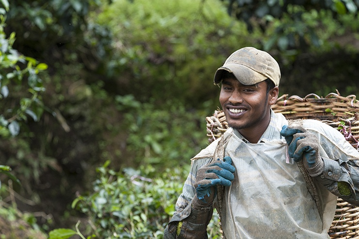 Cameron Highlands Ridiculously Photogenic Tea Picker