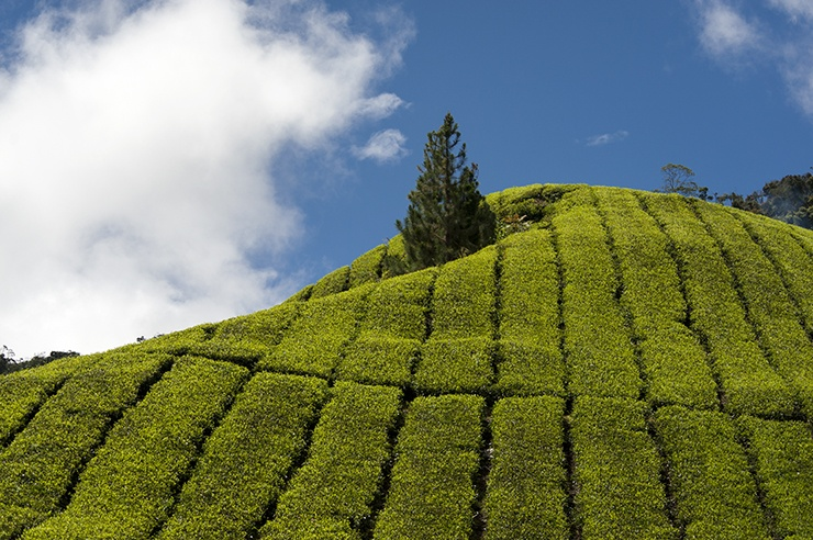 Cameron Highlands Windows Tea Hill