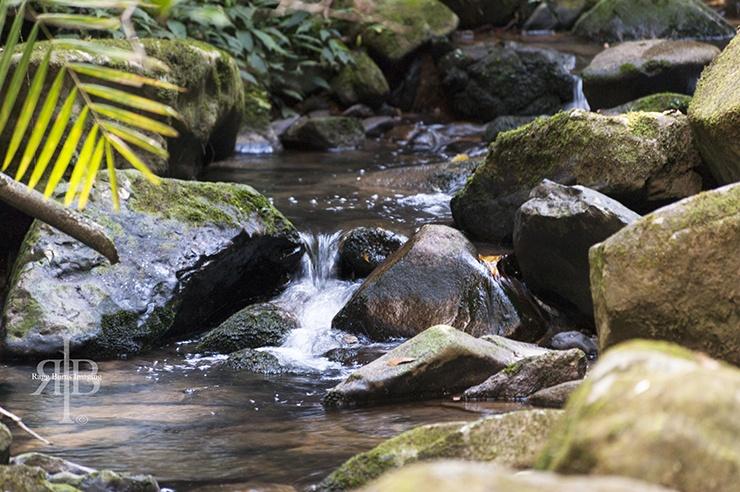 Kinabalu Small Stream