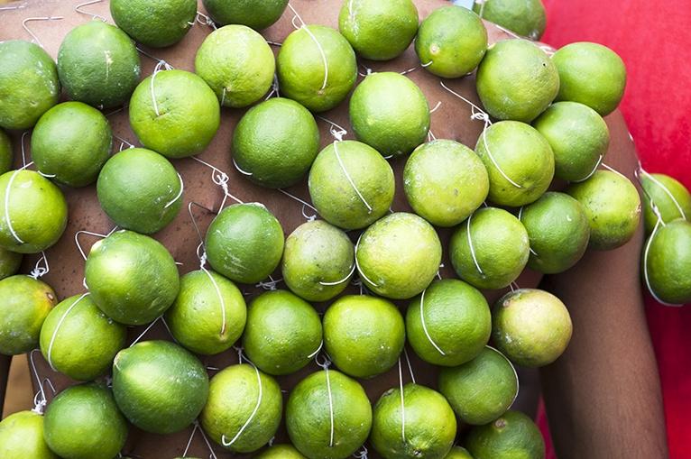 Thaipusam Lime Back