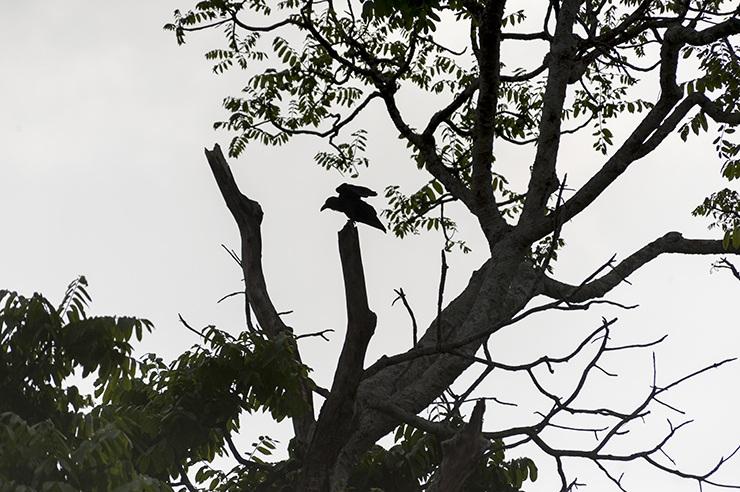 Taman Negara Crow Shadow