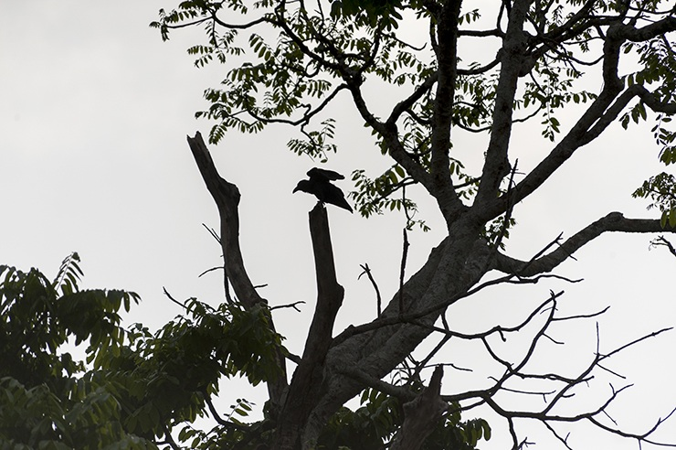 Taman Negara Crow Shadow
