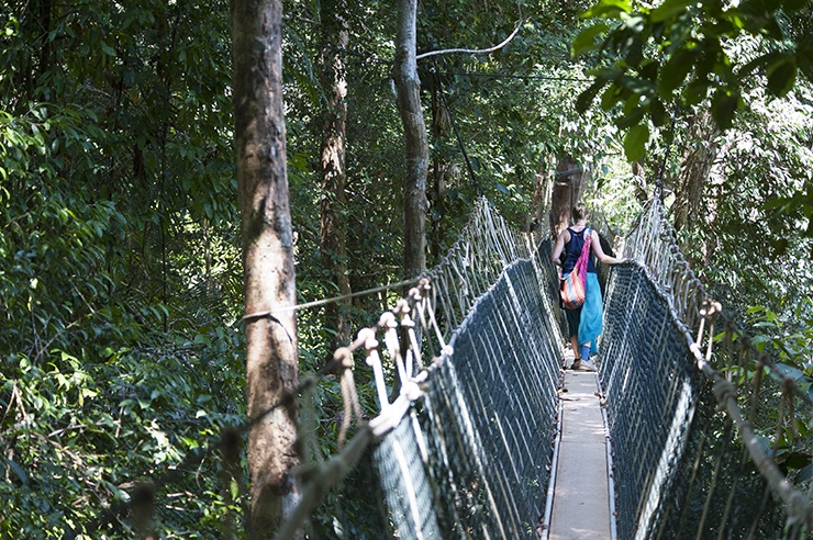 Taman Negara Rope Bridge