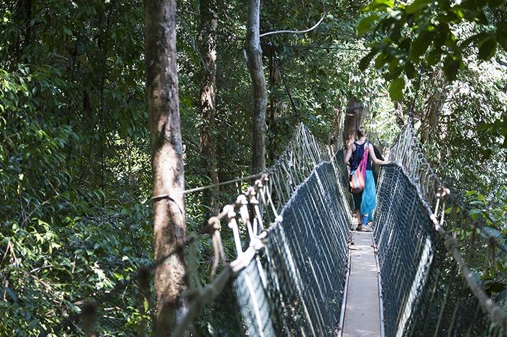 Taman Negara Rope Bridge