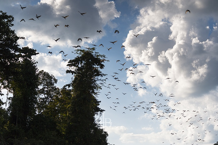 Uncle Tan Egrets Flying