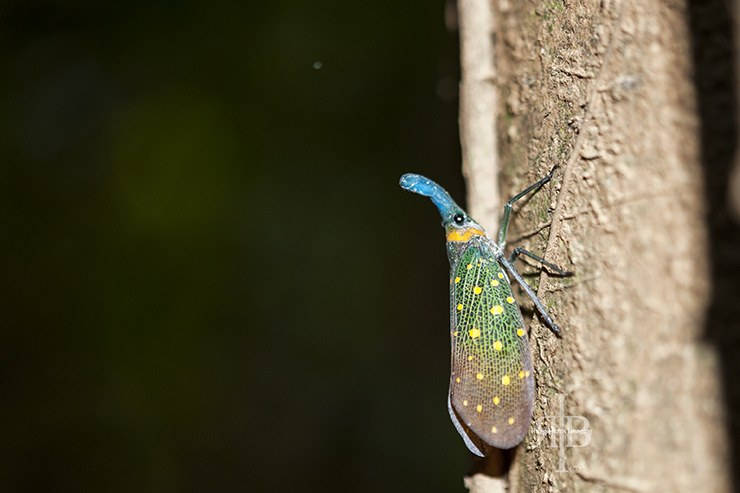 Uncle Tans Colourful Moth