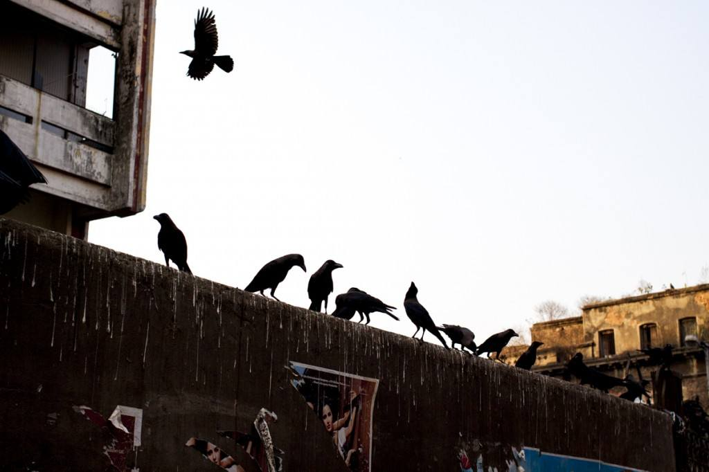 Calcutta crows on wall