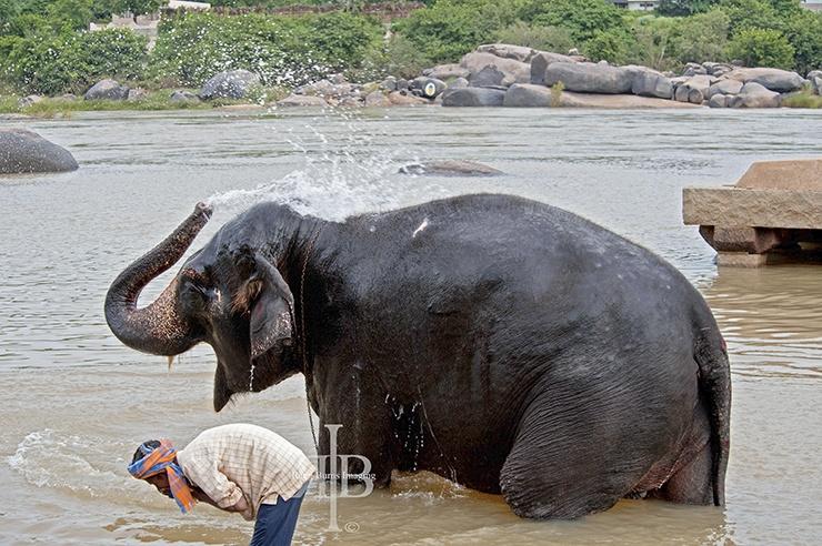 India Hampi elephant wash spray
