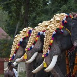 On the Tragic Fate of Temple Elephants