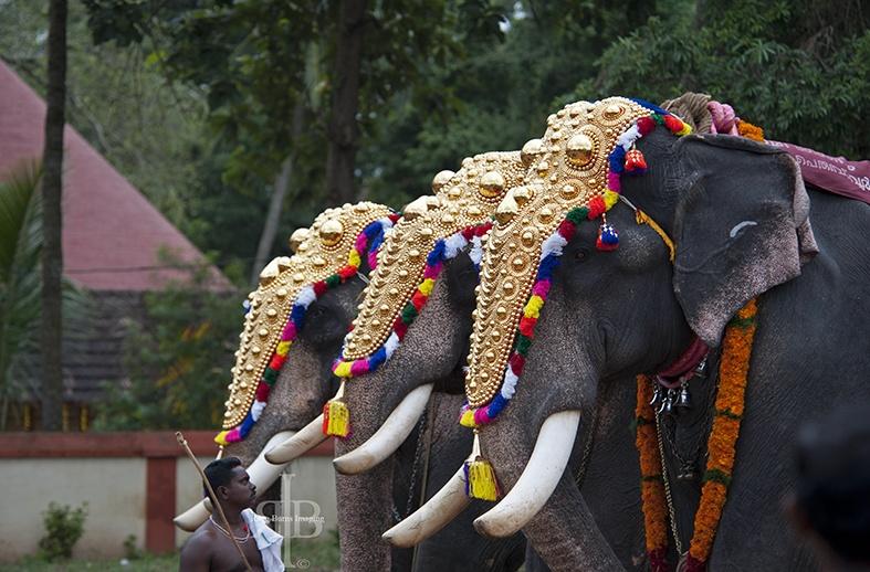 India Onam elephants 2