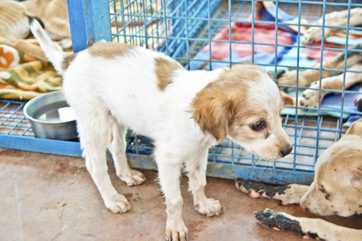 cute white puppy animal aid