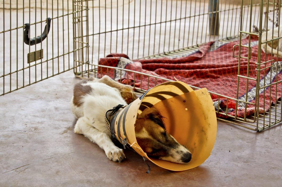 puppy collar animal aid