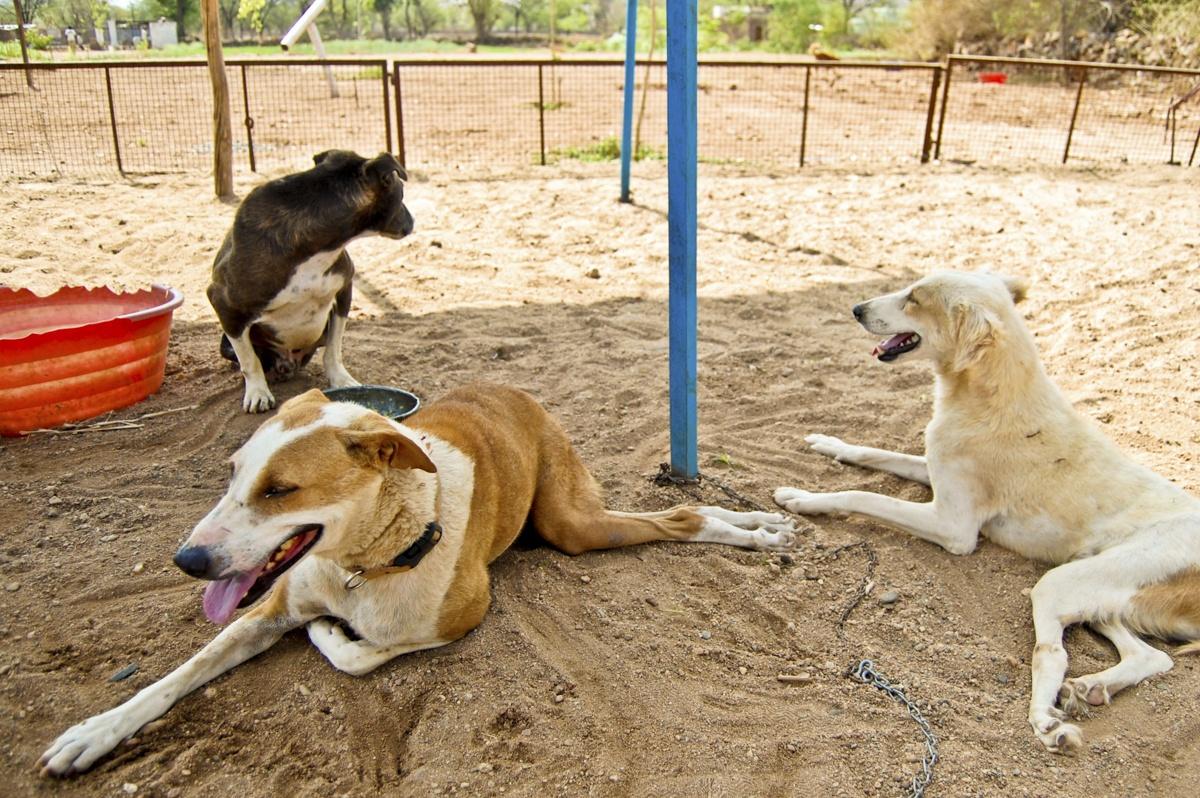 three dogs animal aid