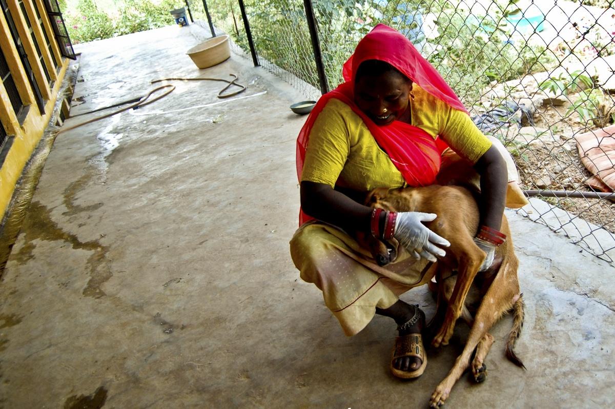 woman patting dog animal aid