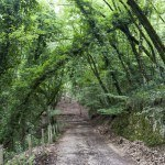 Foresta Umbra: The Shady Forest