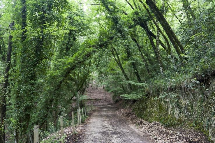 Foresta Umbra road bent trees