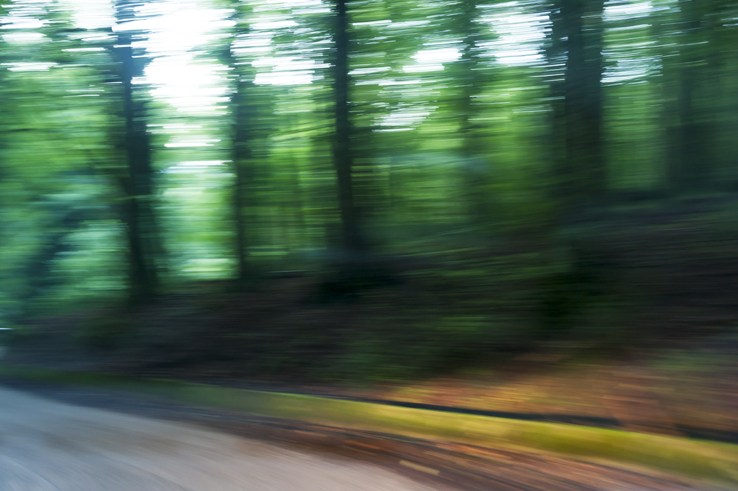 Foresta Umbra Blurry trees