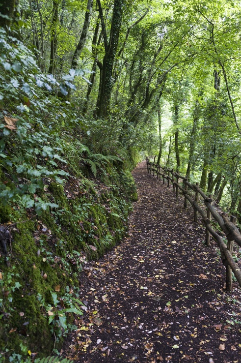 Foresta Umbra Uphill Path