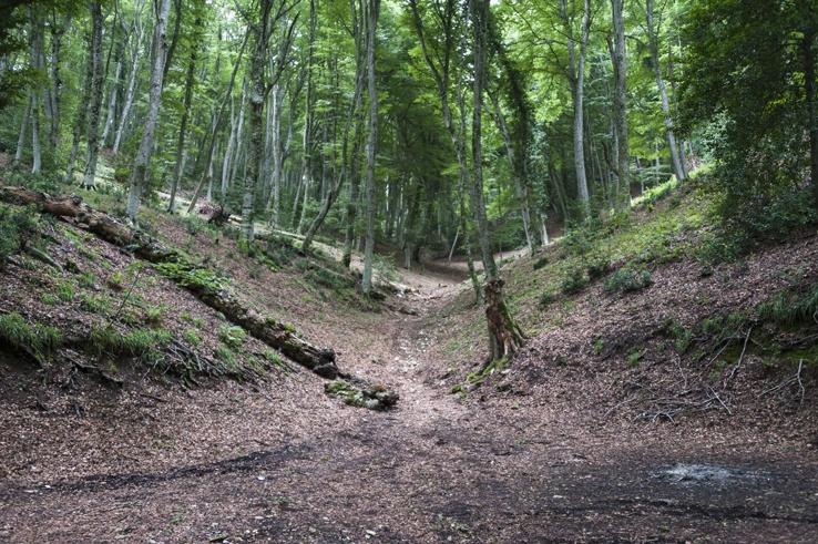 Foresta Umbra Small Valley
