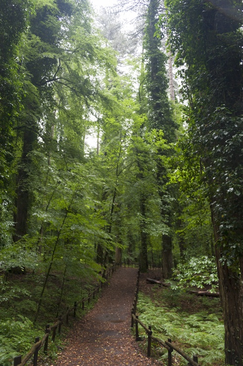 Foresta Umbra Tall Trees
