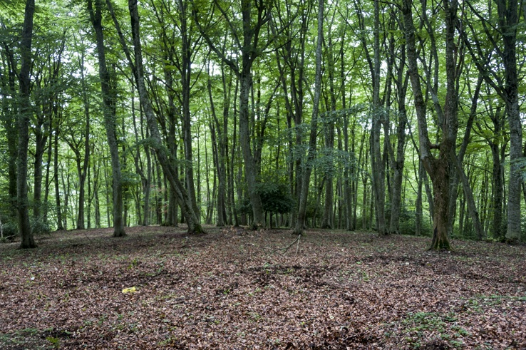 Foresta Umbra Trees Clearing