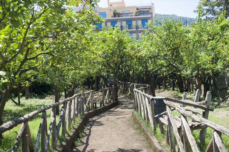 Sorrento Food Tour lemon Grove