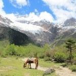 5 Reasons to Visit Yunnan