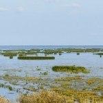 Birdwatching in Liminka Bay with Jari Peltomaki