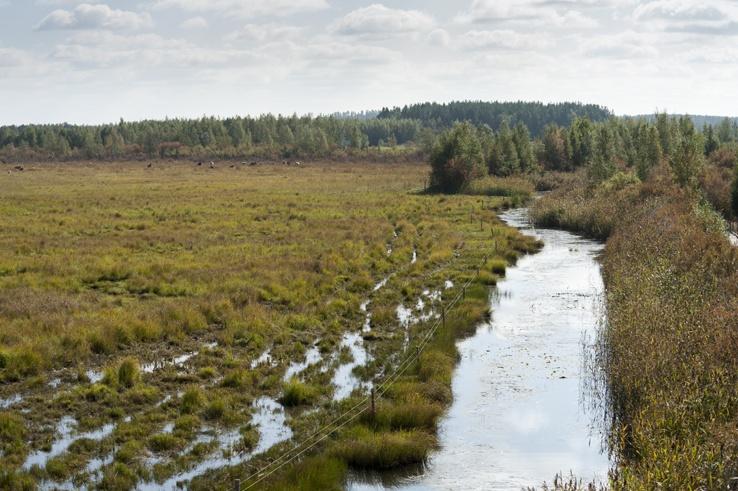 Finland Liminka Bay Stream
