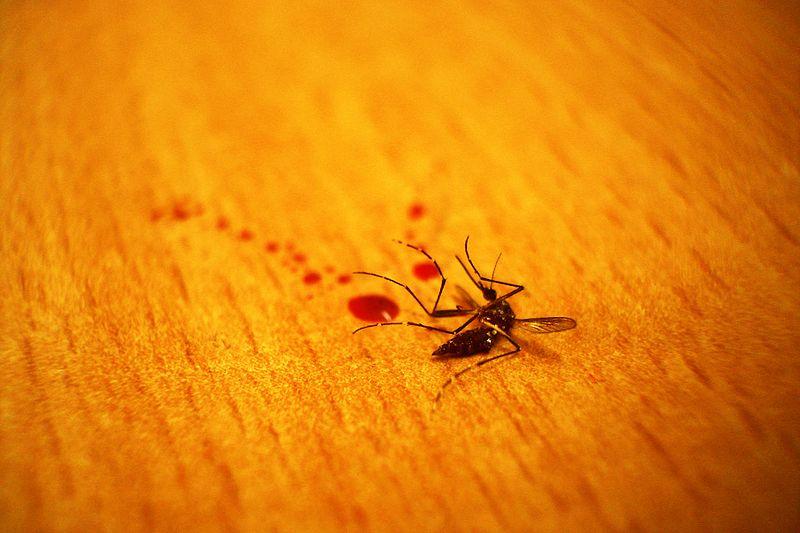 weird finnish events mosquito