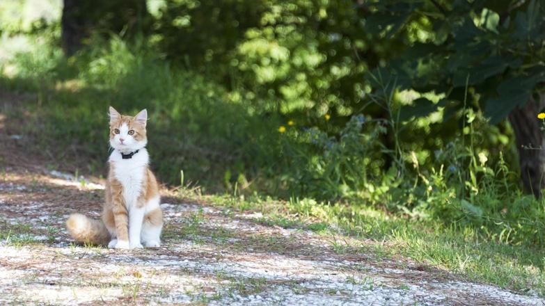 bruno ginger cat