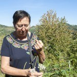 Foraging for Edible Herbs at Borghetto