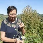 Foraging for Edible Herbs at Borghetto