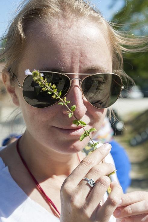 edible herbs pimpinella