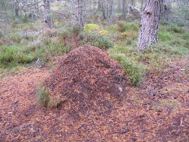 weird finnish events ants nest
