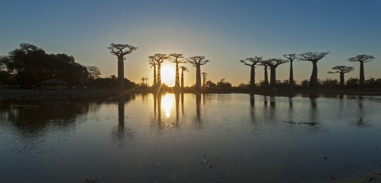 Madagascar Avenue of baobabs Sunset