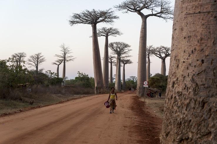 Madagascar Avenue of baobabs lady