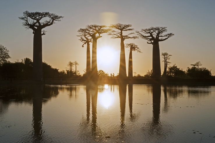 Madagascar Avenue of baobabs sunset meeting