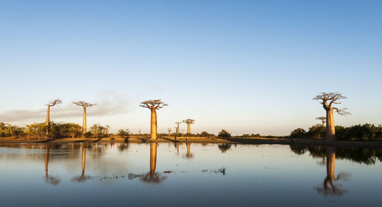 Madagascar Avenue of baobabs lake
