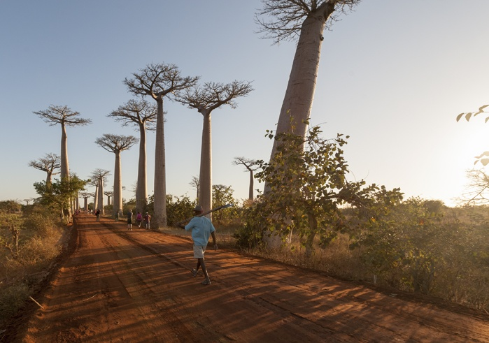 Madagascar Avenue of baobabs workers