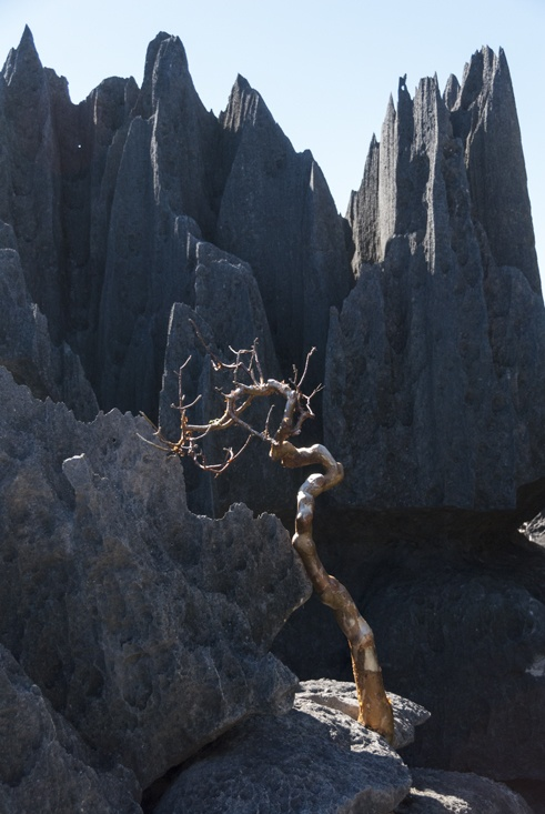 Tsingy de bemaraha Naked Tree