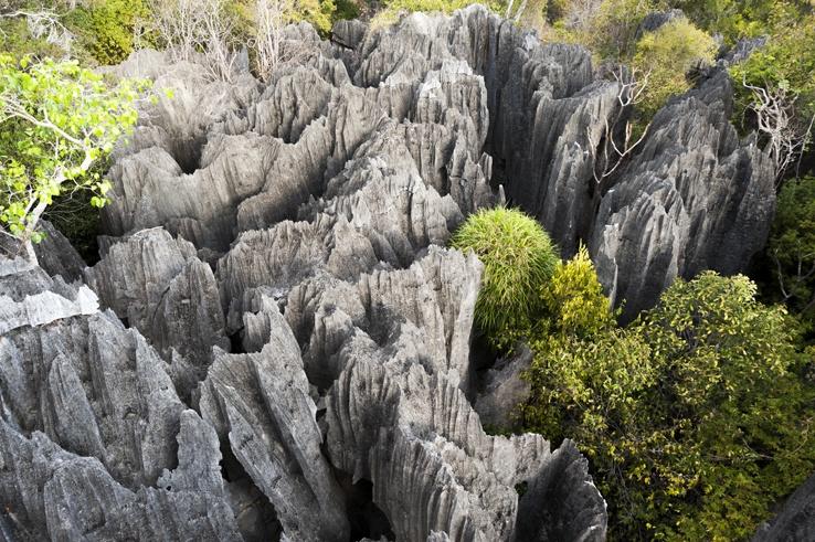 Tsingy de Bemaraha tree