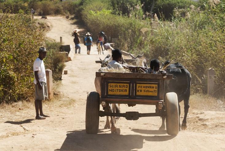 Madagascar Pic Boby Zebu Cart