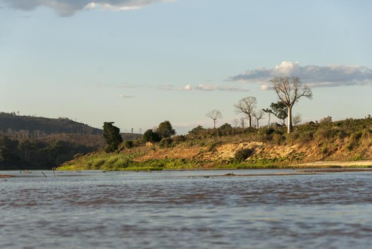 Madagascar Tsiribihina River baobabs