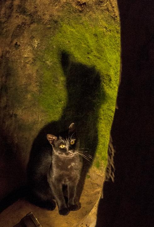 underground black cat shadow