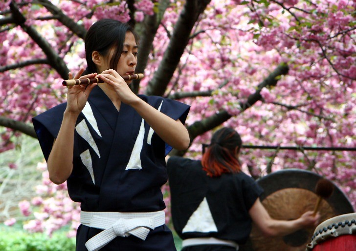 cherry blossoms play music