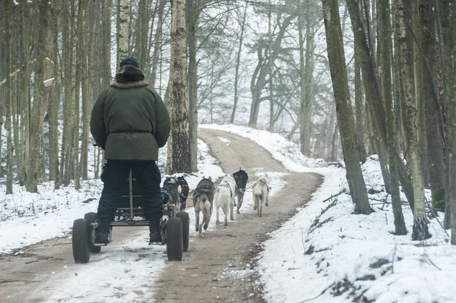 dog sledding in lithuania cart