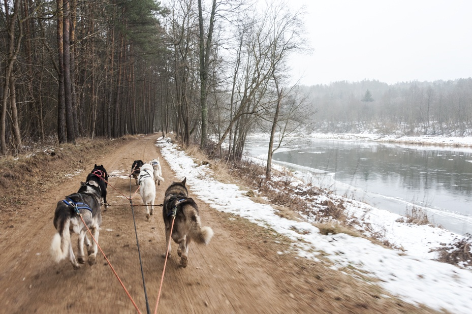 dog sledding in Lithuania river